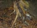De voet van een boom