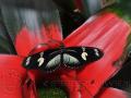 Vlinder op plant