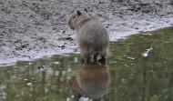 Dieren spiegels