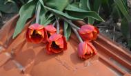 Flora spiegels