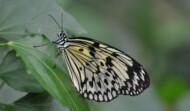 Vlinders Insecten Reptielen